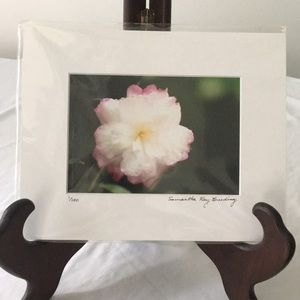 Camellia Photograph Signed & Numbered